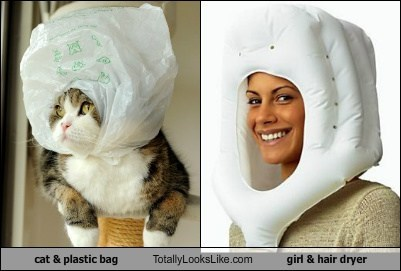 Cat in Plastic Bag Totally Looks Like Girl With Weird Hair Dryer