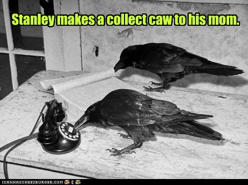 call,crows,phone,pun,ravens