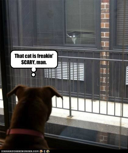 That cat is freakin' SCARY, man.