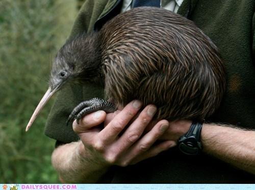 bird,bowing,kiwi,squee spree,winner