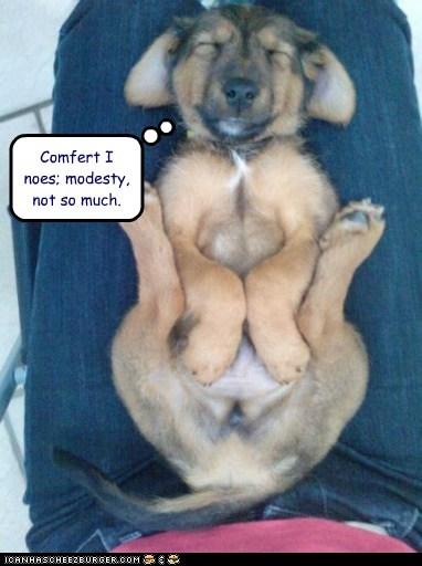 dogs,lap dogs,modesty,nap,puppy,sleeping
