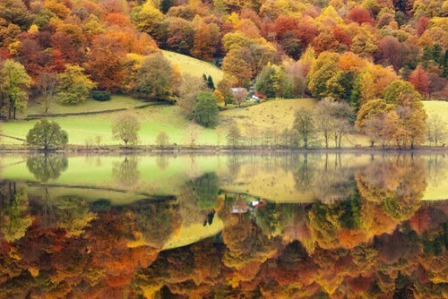 autumn,england,Forest,Hall of Fame,lake,reflection