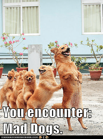 You encounter: Mad Dogs.