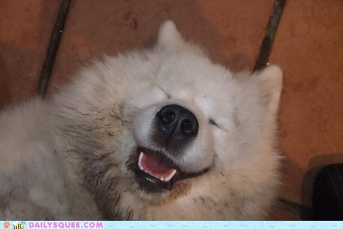 dirty,dogs,mudd,reader squee,samoyed,smile