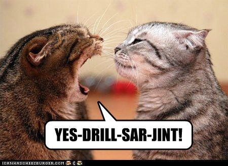best of the week,boot camp,Cats,drill sergeant,Forrest Gump,lolcats,military,Movie,reference,scream,two cats,yell,yelling