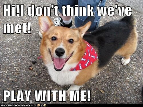 best of the week,corgi,corgis,dogs,excited,Hall of Fame,happy,i just met you,new friends,play,play with me