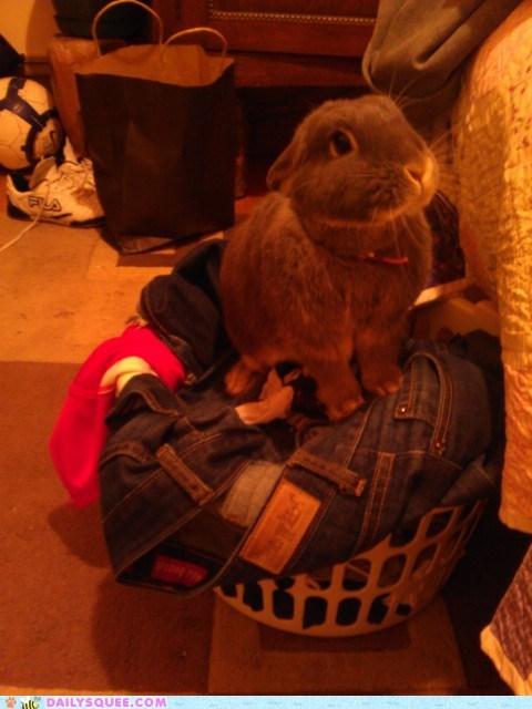 bunny,happy bunday,laundry,pet,reader squee