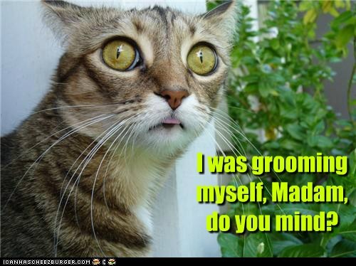 I was grooming myself, Madam