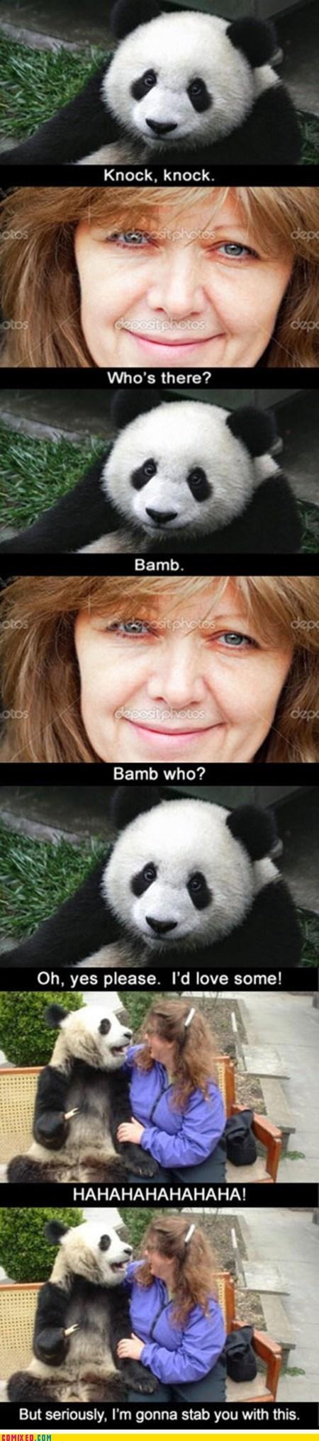 animals,best of week,cute,knock knock,panda,stabbed