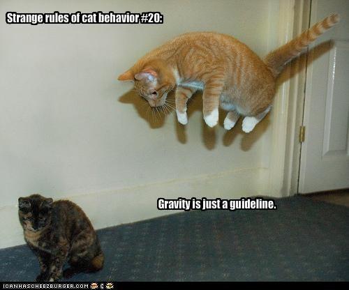cat behavior,fly,Gravity,jump,physics