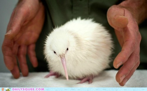 Squee Spree: Snow White Kiwi