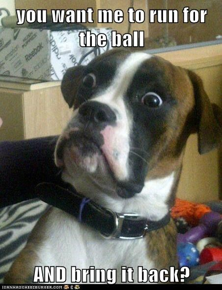Animal Memes: Baffled Boxer - Then Stop Throwing It!