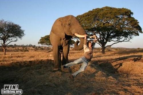 animals,bad idea,elephant,mother nature ftw,whee