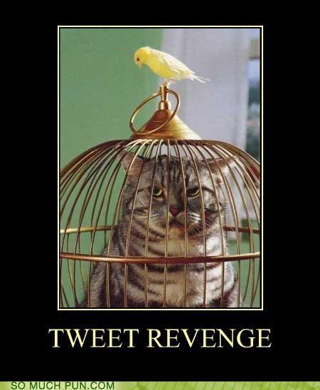bird,context,contextually relevant,revenge,similar sounding,sweet,tweet