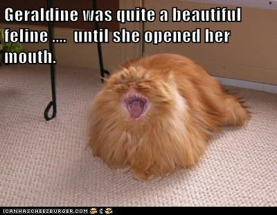 Geraldine was quite a beautiful feline ....  until she opened her mouth.