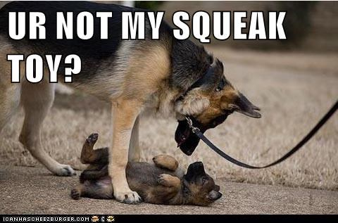 dogs,German Shepard,mistake,puppy,squeaky toy