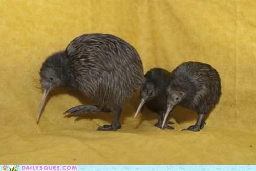Babies,bird,kiwi,siblings,squee spree