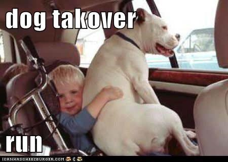 dog takover  run