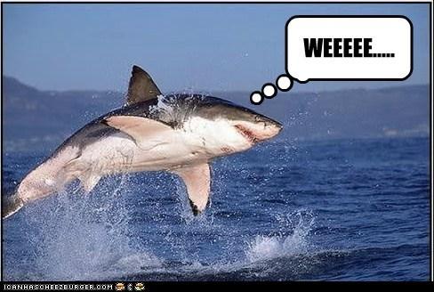Sharky says