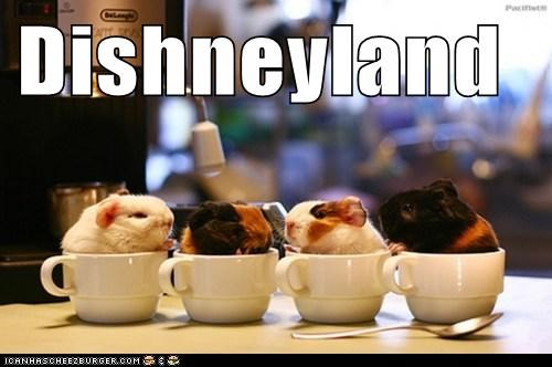 Dishneyland