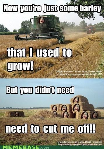barley,gotye,grow,Memes,wheat