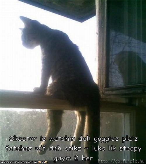 Skeeter iz watchin deh goggiez plaiz fetchez wif deh stikz ~ luks lik stoopy gaym 2 her