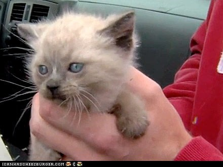Around the Interwebs: Construction Workers Rescue Kittens Found in Concrete
