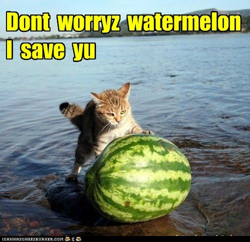 Dont  worryz  watermelon   I  save  yu