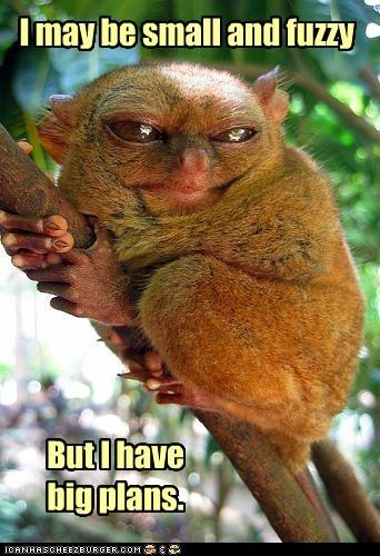 big plans,branch,fuzzy,lemur,plans,small,tarsiers,tree