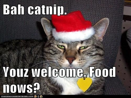 Bah catnip.  Youz welcome. Food nows?