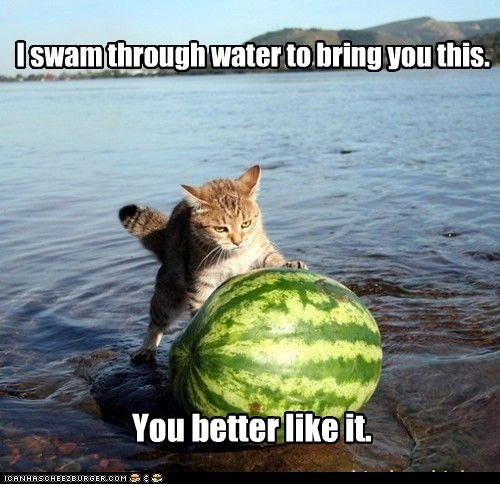 best of the week,Cats,gift,lake,lolcats,present,presents,push,swim,water,watermelon,watermelons