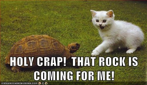 fast,move,overreaction,rock,scary,slow,tortoise,watch out