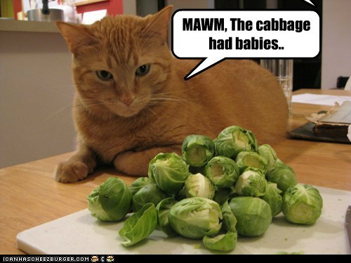 Babies,brussel srpouts,cabbage,creepy,dinner,ew,food,mom,noms,vegetables