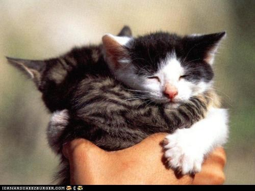 Cyoot Kittehs of teh Day: Holding a Hug