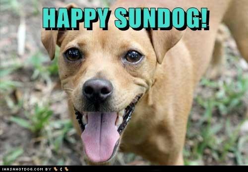 dogs,happy sundog,what breed