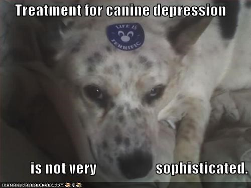 Treatment for canine depression            is not very                    sophisticated.