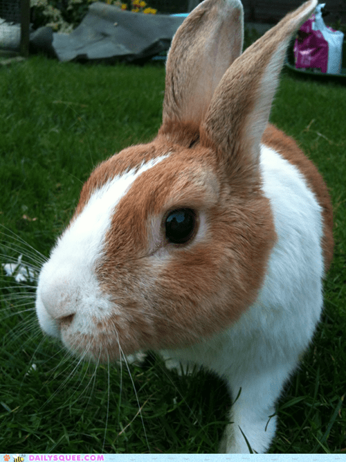 Reader Squee: Hop in the Garden