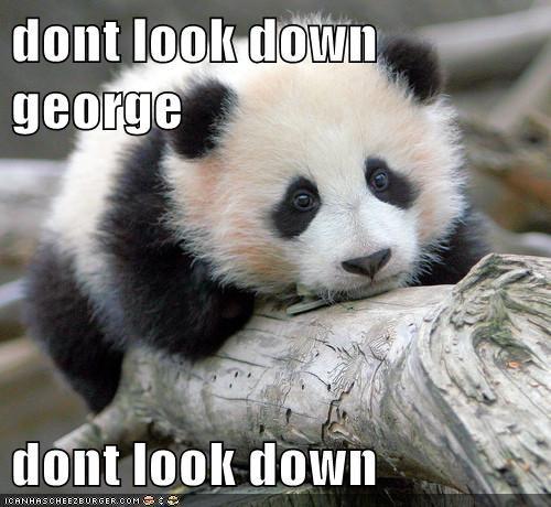 Even Pandas Know Cartoon Physics