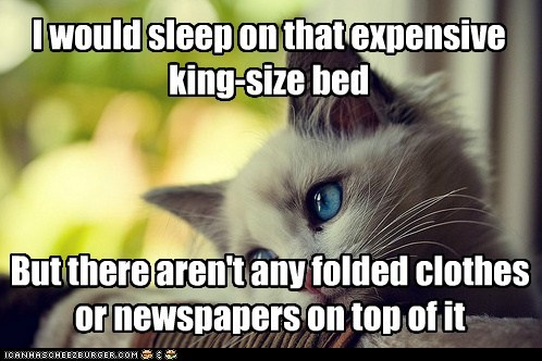 annoying,beds,Cats,clothing,first world cat problems,First World Problems,huge,King Size,Memes,newspapers,whining