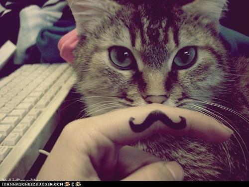 Cat 'Stache