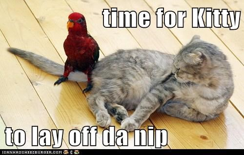 bird,cat,catnip,tail