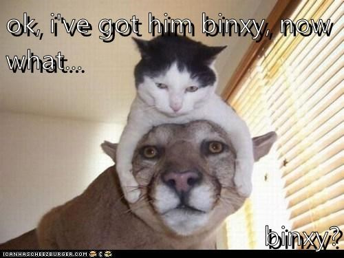 ok, i've got him binxy, now what...  binxy?