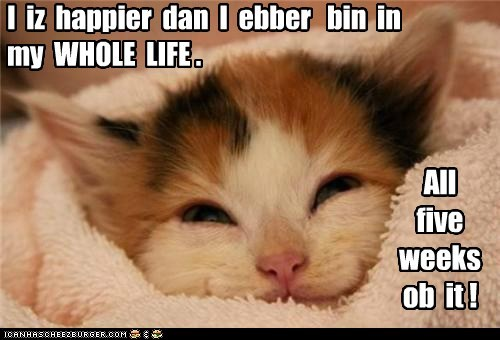 Lolcats: I  iz  happier