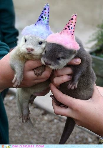 baby,Hall of Fame,hands,hats,otters,Party,party hats,squee,twins