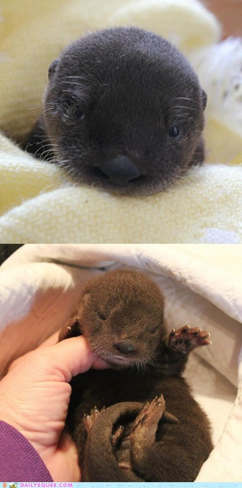 Daily Squee: Help Name This Newborn Otter Pup!