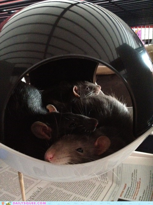 Reader Squee: Snuggled up