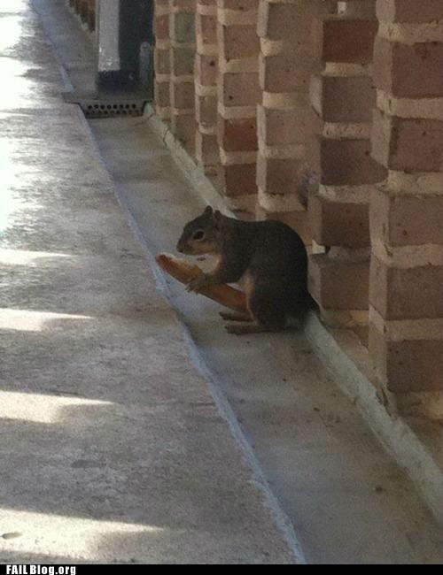 Squirrel FAIL