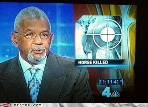 deer,evening news,headlines,horse,news,wrong animal