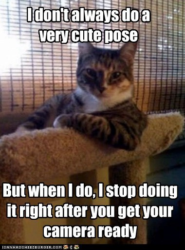 Animal Memes: The Most Interesting Cat in the World - You'll Never Get a Picture to Cheezburger!