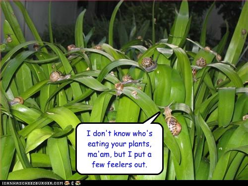 feelers,investigating,plants,puns,snails